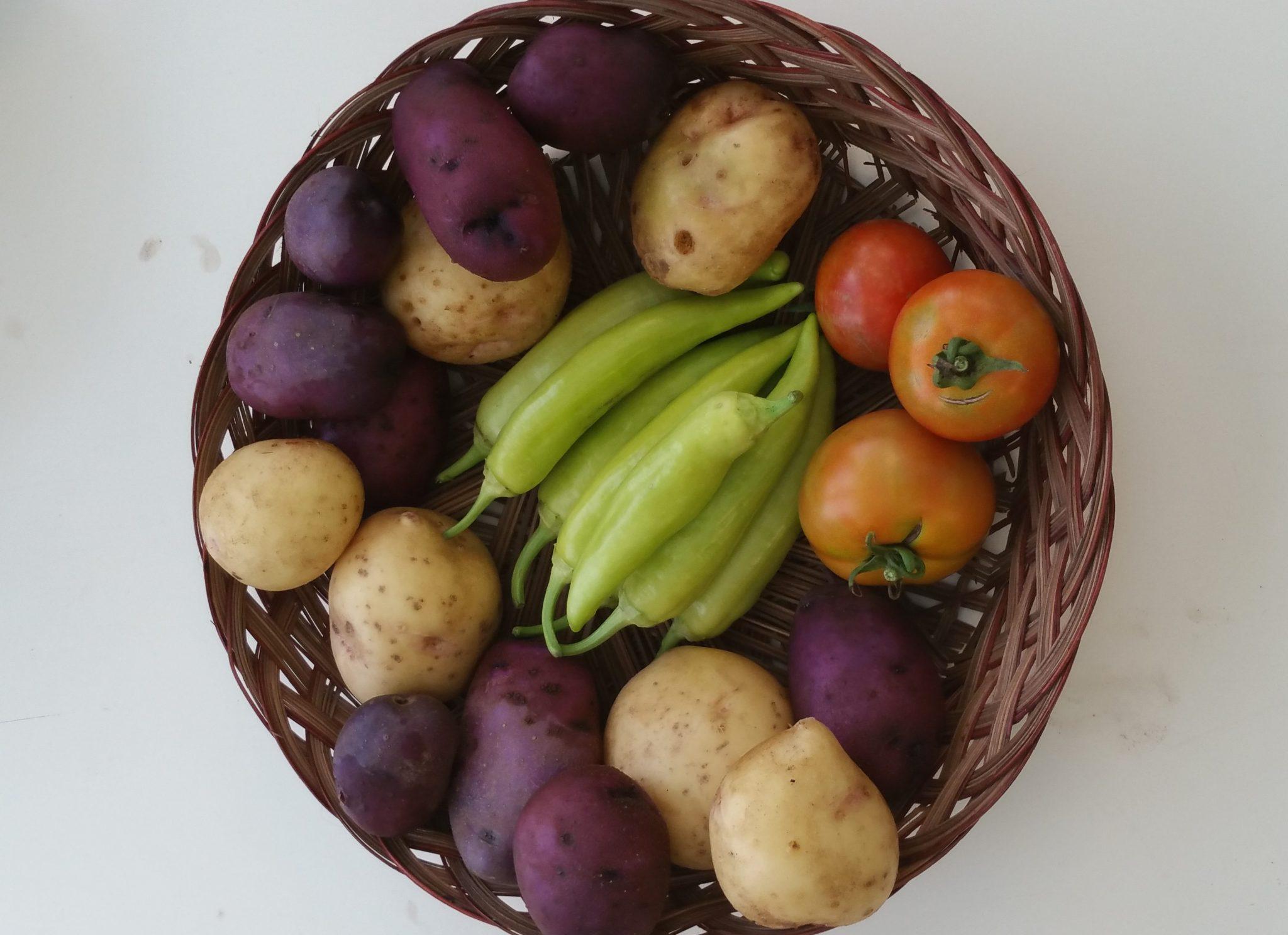 garden produce urban farm linc inc nc